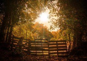 svetlo mezi stromy