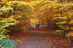 podzimni alej