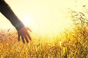 ruka slunce