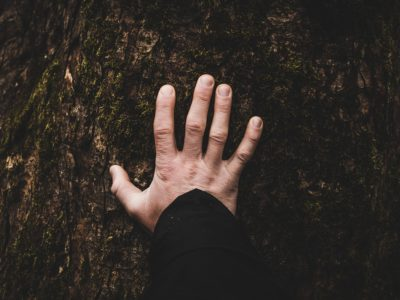Léčba lesem